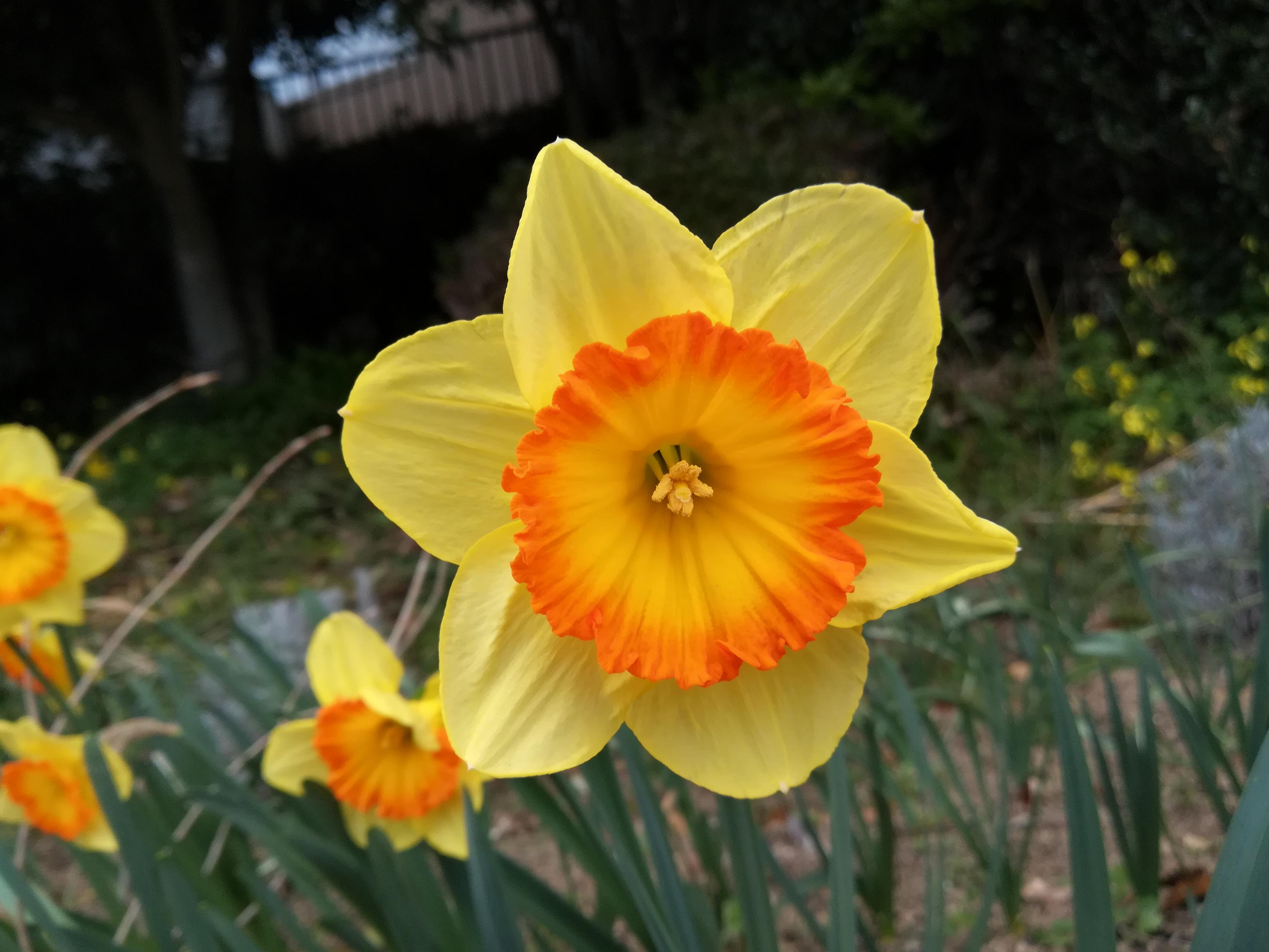 散歩中の花🌼